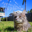 Tabby Cat in the yard — Stock Photo
