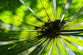 Sun Shines Though a Large Tropical Fern Leaf — Stock Photo