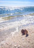 Zomertijd zee schelp op het strand — Stockfoto