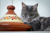 Tabby Cat Guarding Tagine — Stock Photo