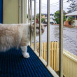 Cat Watching Flood — Stock Photo