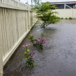 Flooded Garden — Stock Photo