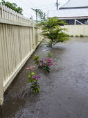 Flooded Garden — Foto de Stock