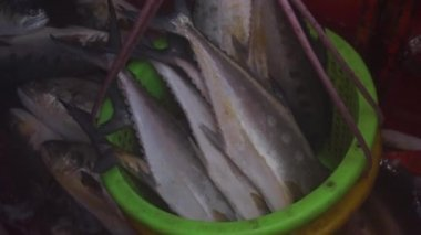 Fish in basket — Stock Video