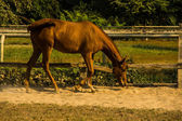 Horse in farm — Foto Stock