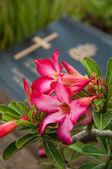 Cemitério de veteranos — Fotografia Stock