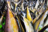 鱼在海鲜市场 — 图库照片