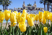 Spring in Monte Carlo — Stock Photo