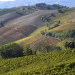 Autumnal landscape of vines and hills in Langhe — Stock Photo