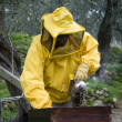 Beekeeper opened beehive - Stock Photo