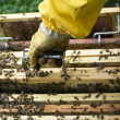 Beekeeper working - Stock Photo