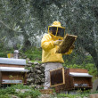Stock Photo: Beekeeper working