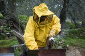 Beekeeper opened beehive — Stock Photo