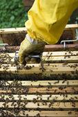 Beekeeper working — Stock Photo