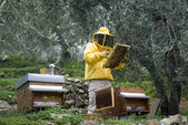 Beekeeper working — Foto Stock