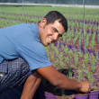 Stock Photo: Farm worker preparing new plants