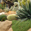 Stock Photo: Cactus garden