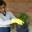 Senior woman gardening — Foto de Stock