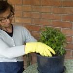 Senior woman gardening — Stock Photo #18804105