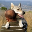 Stock Photo: Mwith his dog