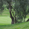 Foto Stock: Olive tree at golf course