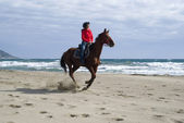 Horse riding on the beach — Stock Photo