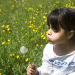 Girl blowing a dandelion - Stock Photo