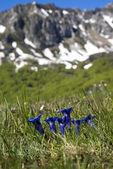 Springtime in mountains — Stock Photo