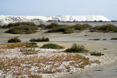 Saline in Camargue — Stock Photo