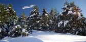 Paesaggio invernale — Foto Stock