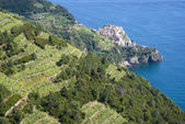 National Park of Cinque Terre, Italy — Stock Photo