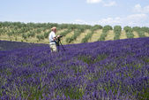 Photographer taking photos by the Plateau Valensole in Provence — Stock Photo