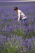 Woman in lavender field — Stock Photo