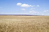 Agricultural landscape — Стоковое фото