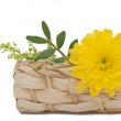 Stock Photo: Flower in Basket