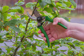 Pruning Garden — Stock Photo