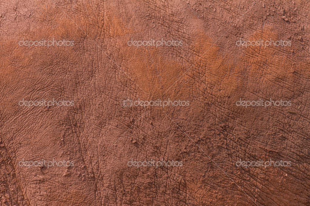 Rhino Skin Texture — Stock Photo © suzbah #30811185