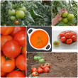 Tomatoes — Stock Photo #41249457