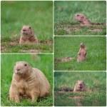 Groundhog — Stock Photo #41567185