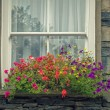 Stock Photo: Window Box