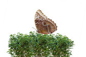 Butterfly on Bush — Stock Photo
