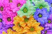 五颜六色的花 — 图库照片