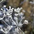 Frozen plant — Stock Photo #18430963