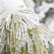 Frozen plant — Stock Photo #18432707