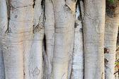 Banyan Tree Structure — Stock Photo