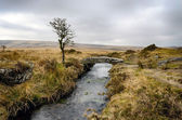 Winter on Dartmoor — Stock Photo