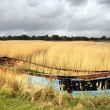 Abandoned Boat in Reeds — Stock Photo