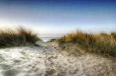 Path through the Dunes — Stock Photo
