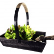 Old Wooden Trug Filled With Lettuce - Stock Photo