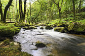 Golitha Falls in Cornwall — Stock Photo